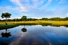 Agua de la calma del humedal de la reserva de naturaleza foto de archivo libre de regalías