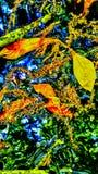 Agua de la carretilla Imagen de archivo libre de regalías