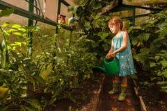 Agua de la chica joven con la regadera en el invernadero Fotografía de archivo libre de regalías