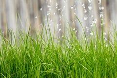Agua de la hierba imágenes de archivo libres de regalías