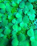Agua de la planta Fotos de archivo libres de regalías