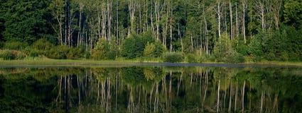 Agua de la reflexión del bosque Imagen de archivo libre de regalías