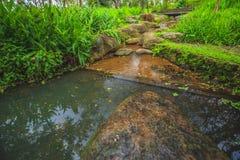 agua de la roca de las malas hierbas Fotografía de archivo libre de regalías