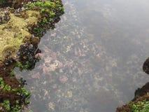 Agua de la roca de los pescados de la playa de la naturaleza Foto de archivo libre de regalías