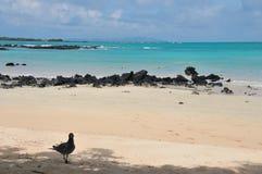 Agua de la turquesa en una playa tropical Imagen de archivo