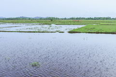 Agua de lluvia en campo del arroz antes de la estación sembrada Fotografía de archivo