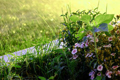 Agua de lluvia que cae en las flores en jardín Imágenes de archivo libres de regalías