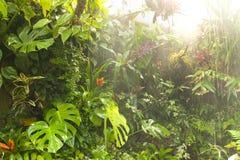 Agua de lluvia tropical de la selva tropical   Foto de archivo libre de regalías