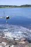 Agua de mar contaminada Fotos de archivo libres de regalías