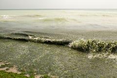 Agua de mar sucia por completo de la alga marina Imagenes de archivo