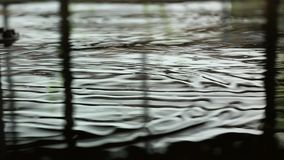 Agua de ondulación almacen de video