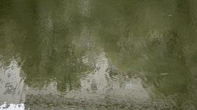 Agua de ondulación verde de la charca almacen de video