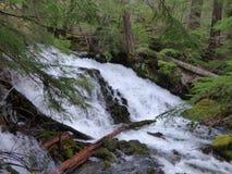 Agua de precipitación Imagen de archivo libre de regalías