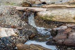 Agua de precipitación en Lincoln Park Fotos de archivo