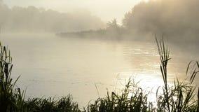 Agua de río brumosa del flujo de la subida de la niebla de la reflexión de la salida del sol de la mañana almacen de metraje de vídeo