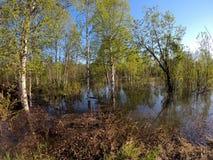 Agua de río inundada en bosque del verano Fotografía de archivo libre de regalías