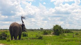 Agua de rociadura del elefante en Botswana salvaje foto de archivo