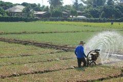 Agua de rociadura en arroz Imagen de archivo