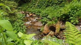 Agua de Slomotion que se mueve en cascada en bosque de la montaña almacen de metraje de vídeo