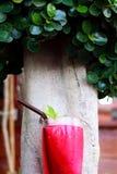 Agua de soda roja en el jardín Imágenes de archivo libres de regalías