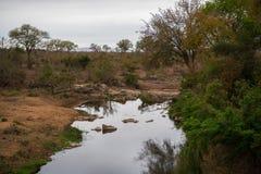 Agua de superficie tranquila en el parque nacional de Kruger Fotos de archivo