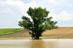 Agua de tierra adentro Fotos de archivo