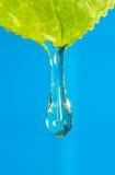 Agua de vivo Foto de archivo libre de regalías