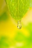 Agua de vivo Imagen de archivo libre de regalías