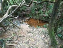Agua del ambiente foto de archivo