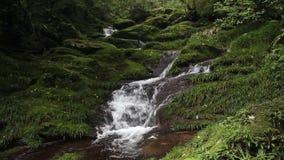 Agua del bosque primario