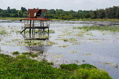 Agua del capitolio, refugios hechos del decaimiento de madera en el medio de Imagen de archivo libre de regalías