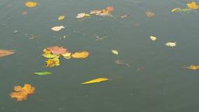 Agua del descenso de las hojas de otoño metrajes
