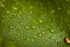 Agua del descenso en las plantas Imágenes de archivo libres de regalías