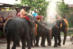 Agua del espray de los elefantes en ellos mismos feliz Imágenes de archivo libres de regalías