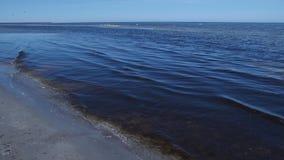 Agua del mar Báltico con la mala hierba y el sol florecientes oscuros desde arriba almacen de metraje de vídeo