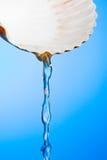 Agua del Seashell Imagen de archivo