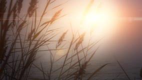 Agua del sol del amanecer de la hierba del lago sunset almacen de metraje de vídeo