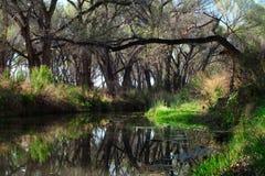 Agua del verde de 419 Riperian imagen de archivo