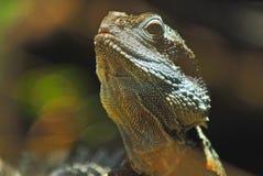 Agua Dragon Portrait Fotos de archivo
