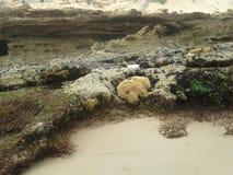 Agua e hierba de la roca Imagen de archivo