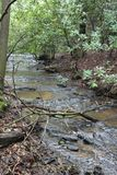 Agua en el bosque Imágenes de archivo libres de regalías