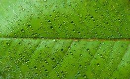 Agua en la hoja Foto de archivo libre de regalías