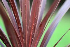 Agua en la planta Imagen de archivo