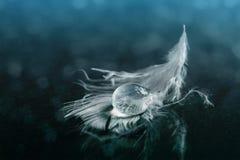 Agua en la pluma blanca Foto de archivo