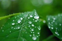 Agua en las hojas Foto de archivo libre de regalías
