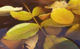 Agua en parte sumergida de las hojas Fotografía de archivo