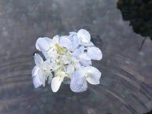 Agua en Tirta Empul, templo en Bali, Indonesia del agua santa fotografía de archivo libre de regalías
