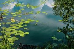 Agua escénica tranquila del remanso y hojas verdes fotografía de archivo