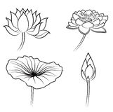 Agua floral Lily Elements para el diseño Foto de archivo libre de regalías