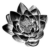 Agua Lily Lotus Flower del estilo del vintage libre illustration